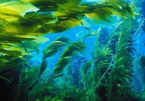 Morskie-vodorosli