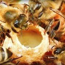Naturopatiya.-Matochnoe-molochko