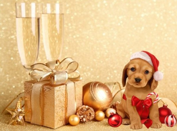 Как загадывать желания на Новый год. Год Собаки