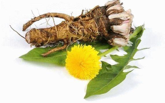 порошок из корней одуванчика