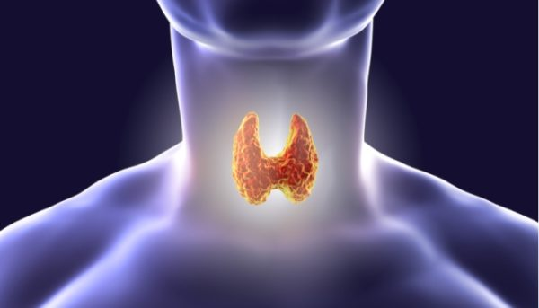 Гормоны влияющие на вес. Как не полнеть