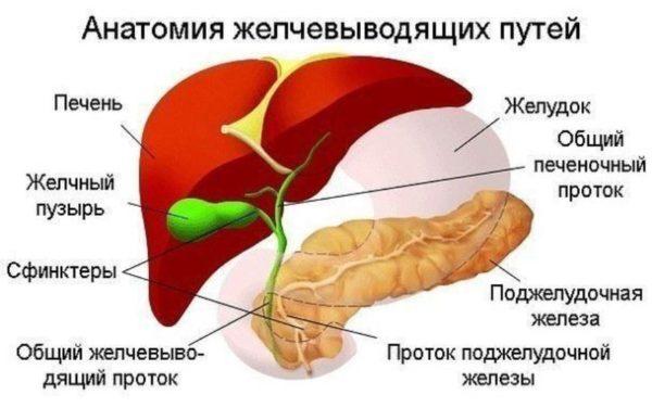 samomassazh-pecheni-i-zhelchnogo-puzyrja